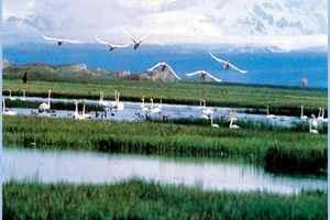 新疆和静县十大景点旅游攻略之一天鹅湖