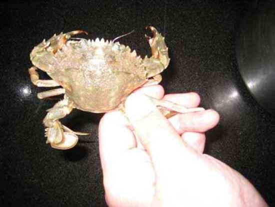 如何挑螃蟹,图四