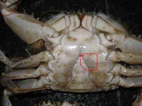 如何挑螃蟹,图七