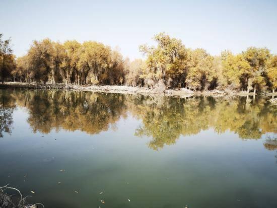 深秋看胡杨慢游库尔勒火车两日三天之沙漠胡杨林公园