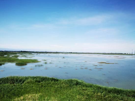 父亲节带爸爸游玛纳斯湿地公园,图五