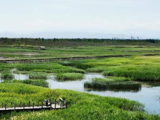 父亲节带爸爸游玛纳斯湿地公园,图九