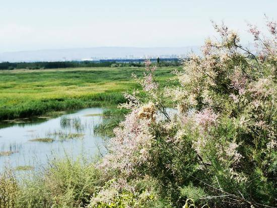 父亲节带爸爸游玛纳斯湿地公园,图十
