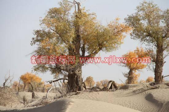 金秋十月南疆之旅(九),图四