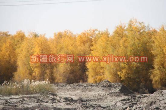 金秋十月南疆之旅(九),图九
