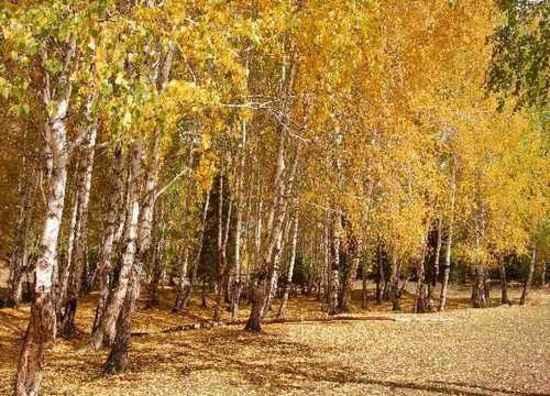 北疆梦幻般的境地,图六
