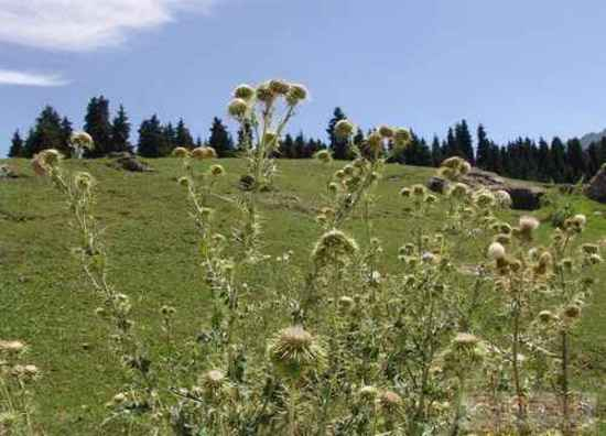 新疆边界上的美丽风光,图六