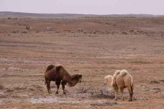 新疆自驾之旅三,图十二