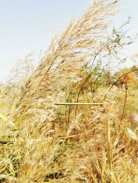 深秋看胡杨慢游库尔勒火车两日三天之罗布人村寨