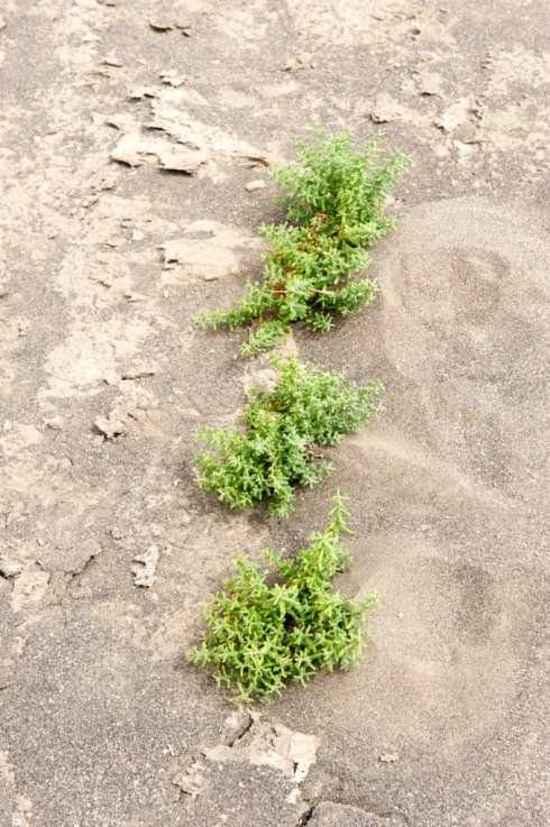 消失的中国最低地-艾丁湖,图十五