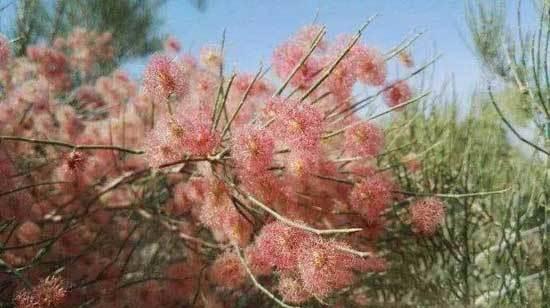 吐鲁番鄯善沙漠两日游记,图二十一