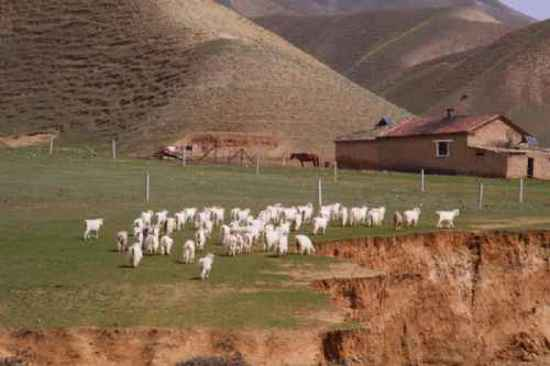 新疆自驾游,图四