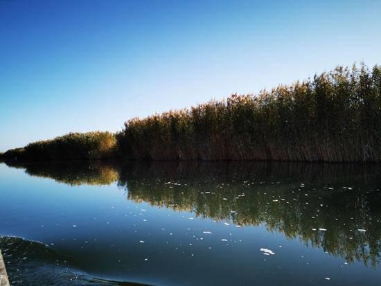 深秋看胡杨慢游库尔勒火车两日三天之莲花湖