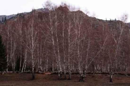 新疆自驾之旅四,图十九
