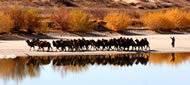 哈巴河白沙湖景区