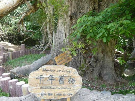 新疆阿克苏天山神木园,图一
