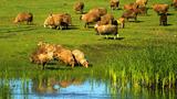 新疆博乐赛里木湖