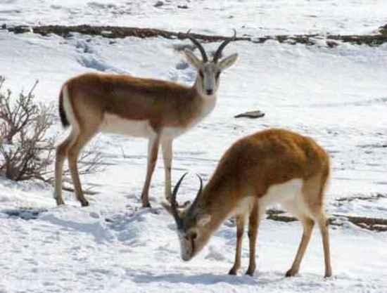 新疆卡拉麦里自然保护区,图二