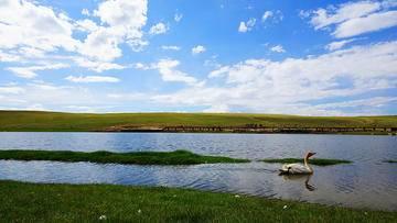 新疆库尔勒巴音布鲁克天鹅湖,图三