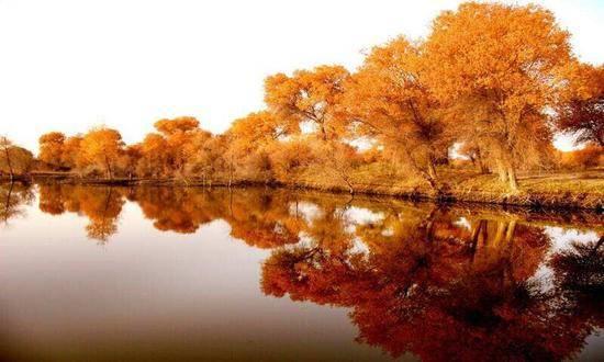 新疆喀什地区泽普县金湖杨国家森林公园,图二