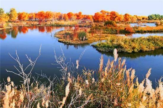 新疆喀什地区泽普县金湖杨国家森林公园,图四