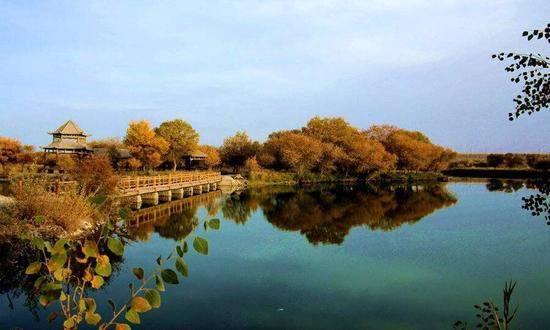 新疆喀什地区泽普县金湖杨国家森林公园,图一
