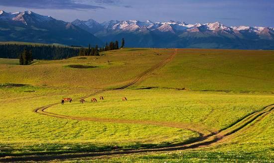 新疆伊犁喀拉峻草原风景区,图一