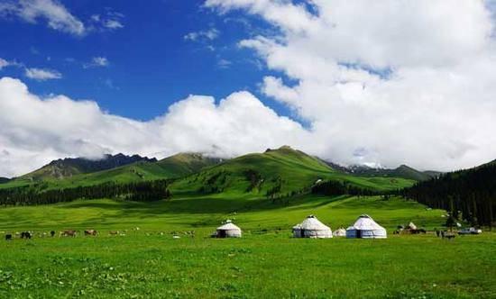 新疆伊犁那拉提森林公园,图三