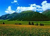 新疆伊犁唐布拉草原