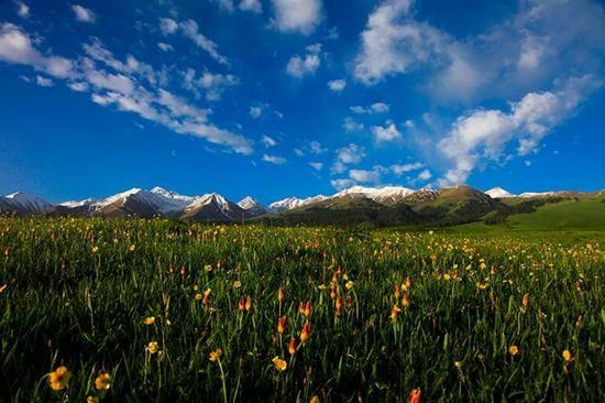 新疆伊犁那拉提森林公园,图一