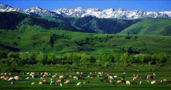 新疆伊犁那拉提草原,圖二