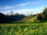 新疆伊犁库尔德宁风景区