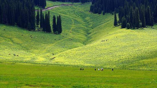新疆伊犁那拉提草原,圖三