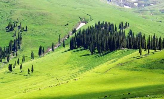 新疆伊犁那拉提森林公园,图二