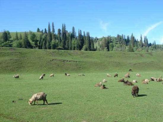 新疆---那拉提草原,图二