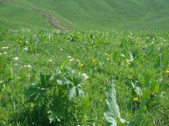 新疆---那拉提草原,图四