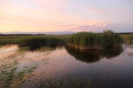 哈巴河:金色芦苇荡,图七