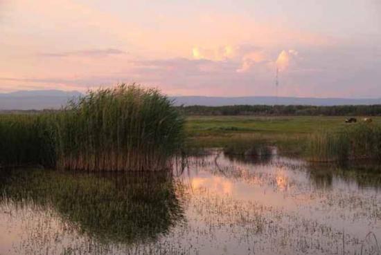 哈巴河:金色芦苇荡,图四
