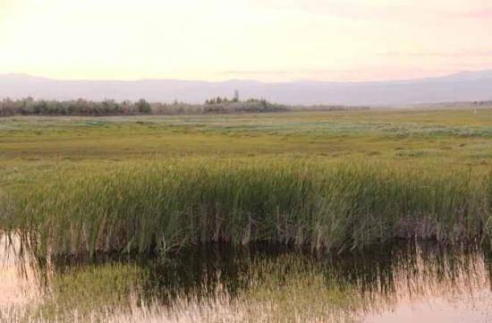 哈巴河:金色芦苇荡,图五