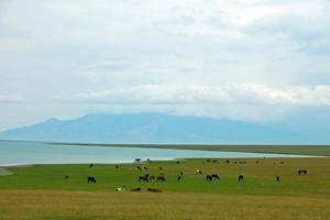 专列五号-天山天池+吐鲁番+喀纳斯+五彩滩+那拉提+赛里木湖+环北疆八日游