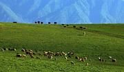 水墨伊犁:天山天池、吐鲁番、赛里木湖、那拉提草原往返8日游