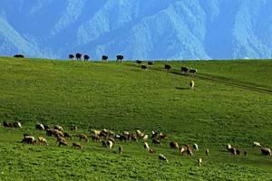 水墨伊犁:天山天池、吐魯番、賽里木湖、那拉提草原往返8日游