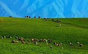 赛里木湖,薰衣草,吐尔根杏花,那拉提,天池,金沙滩,吐鲁番8日