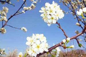 托克逊赏花踏春一日游