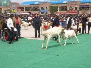 新疆有趣的斗羊游戏